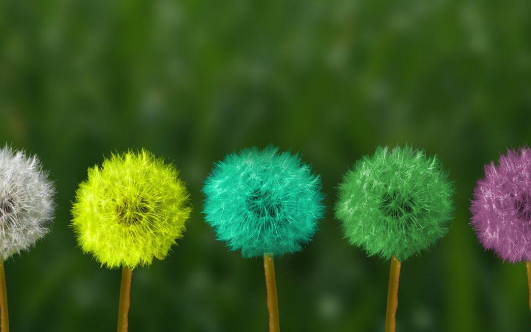 La mindfulness come pratica di base essenziale nella formazione alla psicoterapia